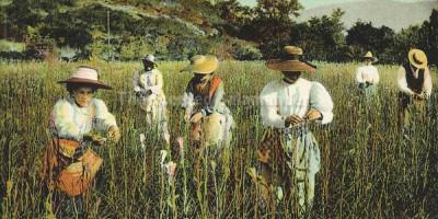 Из истории парфюмерии